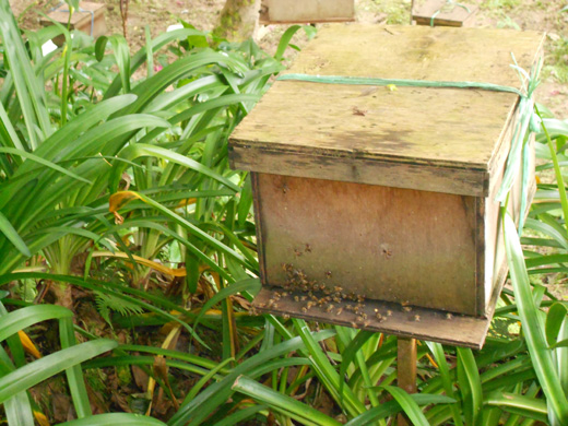 Lebah di Honey Bee Farm, Cameron Highlands