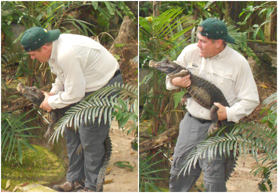 Aksi Brady Barr menangkap buaya Zoo Negara