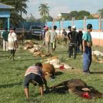 penyembelihan lembu ibadah qurban 2013