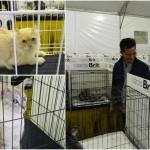 Pertandingan Kucing Antarabangsa di program MaTiC Fest 2013