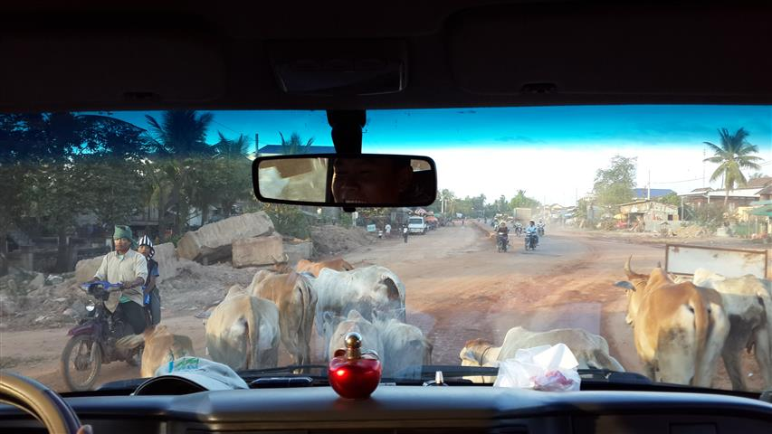 Lembu di Kemboja