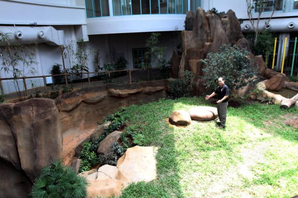 gambar kandang beruang panda Malaysia