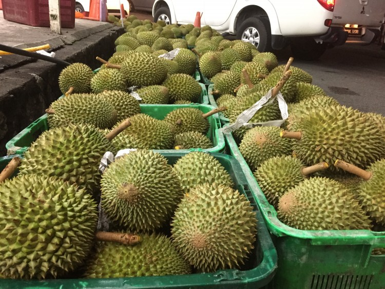 durian musang king SS2 PJ