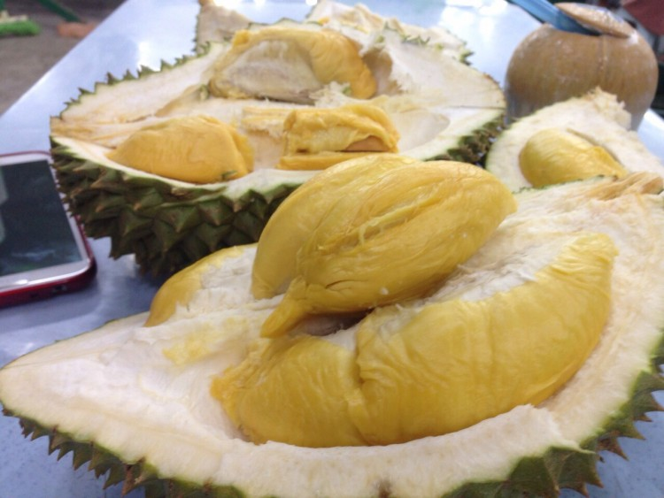 Gambar Durian Udang Merah