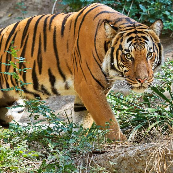 Haiwan di hutan makin pupus, manusia semakin rakus!