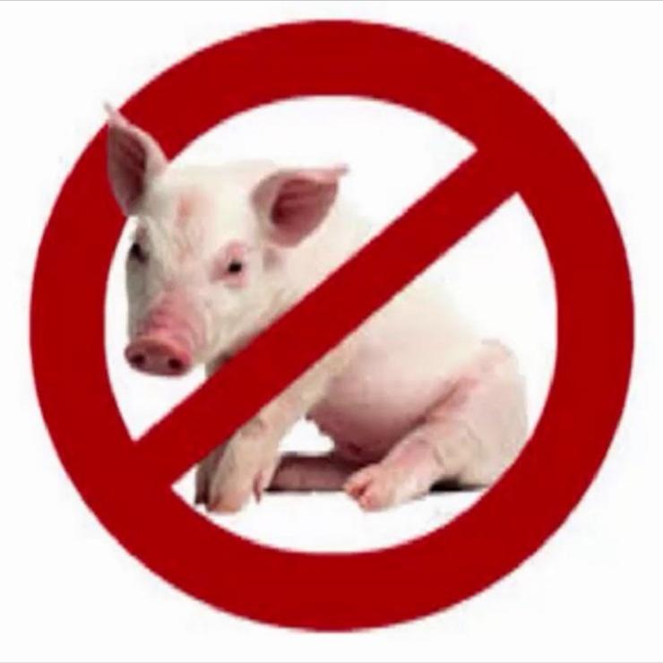 10 Sebab Saintifik Kenapa Allah Haramkan Babi